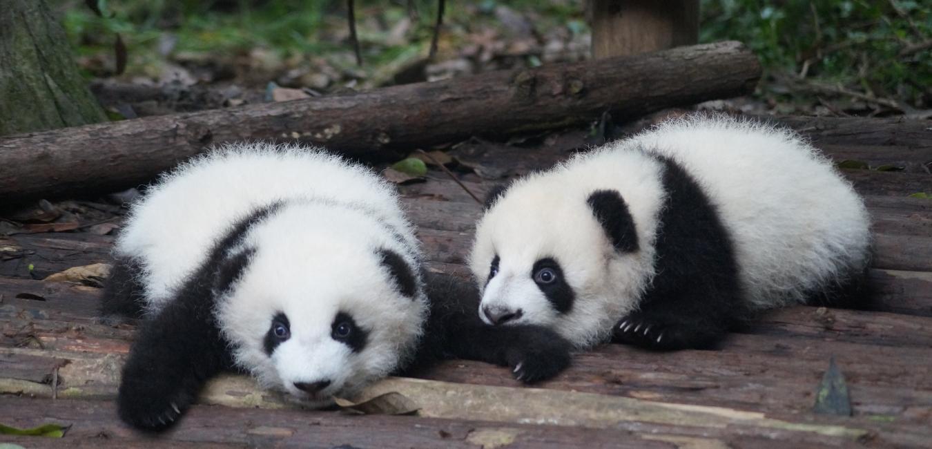 パンダその2
